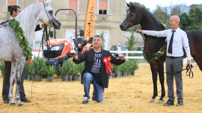 I vincitori nella categoria stalloni