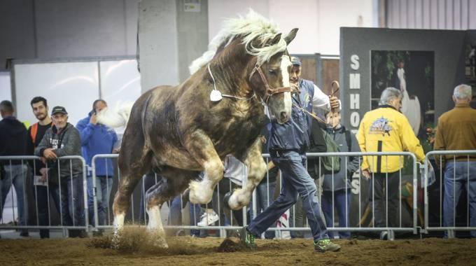 La potenza fatta cavallo, foto Massimo Argenziano