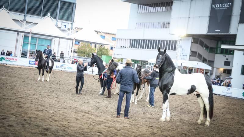Fieracavalli 2018 ©Massimo Argenziano/Cavallo Magazine