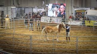 I vincitori dell'Horse Training? sono stati i cavalli!