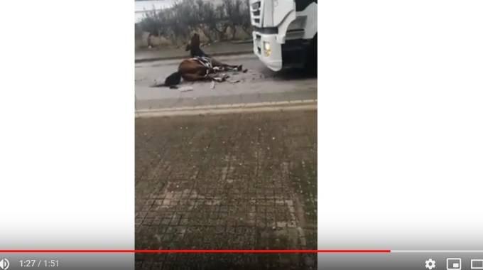 Il cavallo subito dopo lo schianto, frame da Youtube