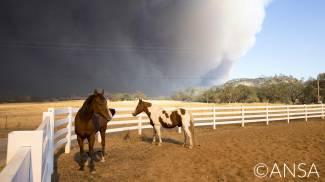 La California brucia: emergenza cavalli e animali