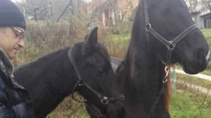 Giuseppe Vicario e i suoi cavalli ritrovati