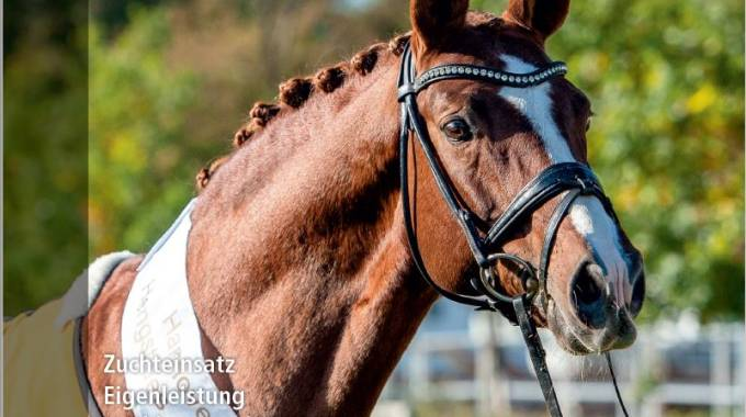 Hanoverian Yearbook Stallions available now