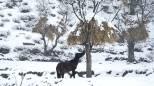 Paese che vai, fienile che trovi: in Kashmir fanno così