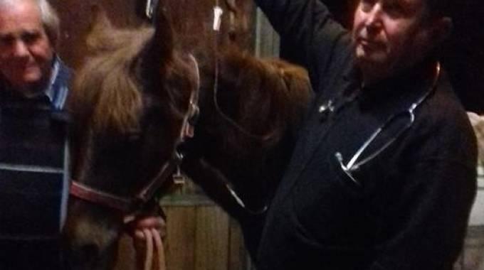 Sissy, una delle cavalline della scuderia Giara Oristanese - foto da Facebook