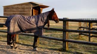 Più paddock per tutti: anche per i cavalli campioni