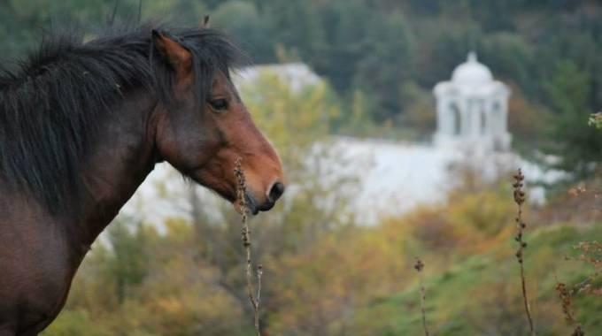 Un cavallo dell'Aveto al lago di Giacopiane, foto di Maria Cristina Magri