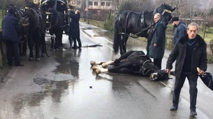 Il cavallo morto a Roccappiemonte, da Facebook