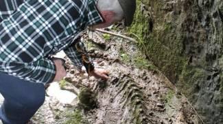 """I """"fossili"""" scultorei della grotta di Urbania"""