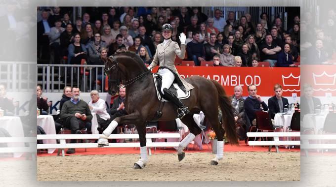 Stallion of the Year 2019: Skovens Rafael ©Ridehesten.com