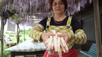 Sagra dell'Asparago rosa di Mezzago