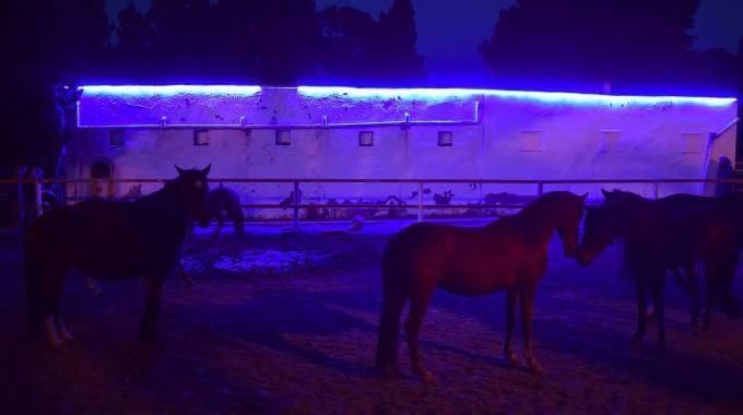 Due ponies Mogods hanno acceso di Blu le notti tunisine ''Autism Awareness Month'' ©CHMahdia