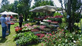 Il Fiore e il Lago,7° Mostra mercato dei Fiori e del Verde