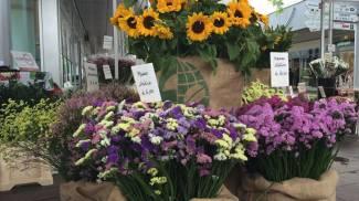 Mercato piante