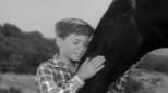 E' morto Joey, l'amico di Furia cavallo del West