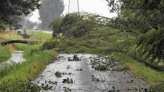 Un albero caduto alle porte di Bizzuno (Scardovi)