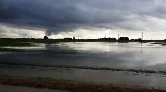 Gli effetti dell'acquazzone nelle campagne Alfonsinesi (Scardovi)