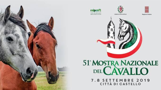 51° Mostra Nazionale del Cavallo