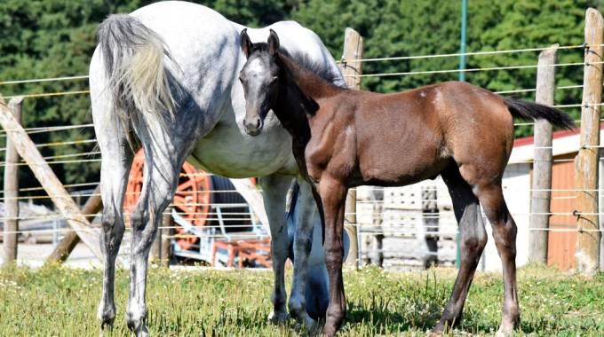 prezzo basso incontrare salvare Cavalli di Persano e Salernitani sotto i riflettori a Castel ...