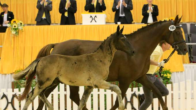 Derby top prize foal for 112,000 Euros (C)Tammo Ernst