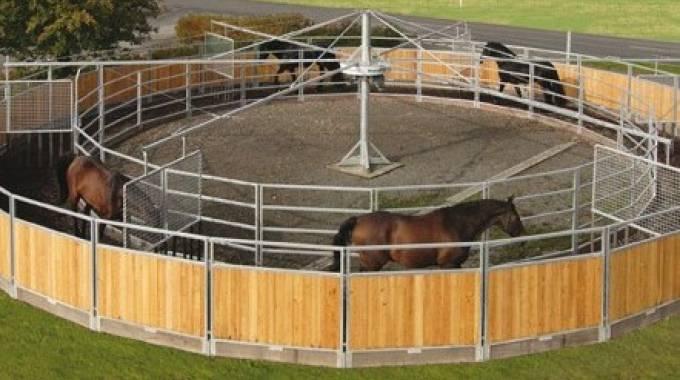 Cavalli in giostra, foto da Wiki Commons - Horseexpers