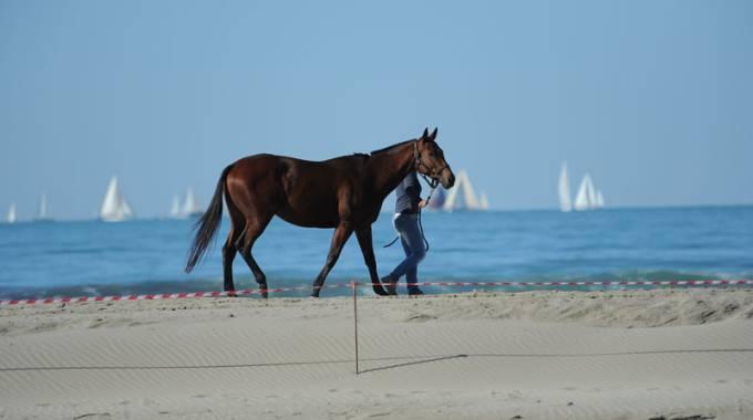 Un cavallo in spiaggia, foto di repertorio