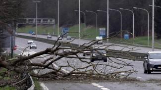 Alberi sull'autostrada in Belgio (foto Ansa)
