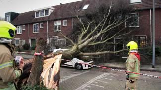 Un albero abbattuto in Olanda (foto Ansa)
