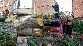 Alberi abbattuti e danni in Belgio per la tempesta Ciara (foto Ansa)