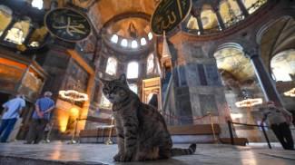 Un gatto prende il fresco nella basilica di Santa Sofia (Ansa)