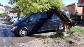 Poggibonsi, albero caduto