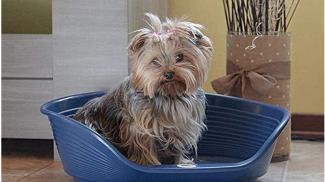 Ferplast Cuccia in Plastica per Cani e Gatti su amazon.it