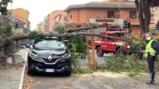 L'albero crollato