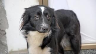 Billy, il cane che aspetta da due mesi fuori casa il padrone ricoverato per Covid