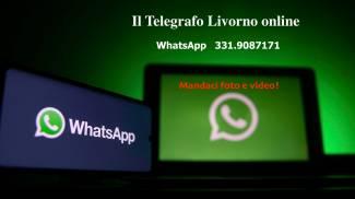 WhatsApp Telegrafo Livorno online