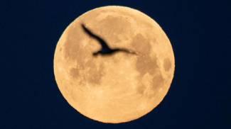 Superluna in Francia (Ansa)