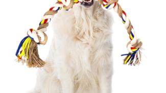 Corda Giocattolo per Cani su amazon.com