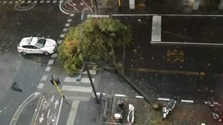 Un albero caduto a Firenze