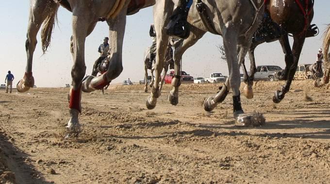 Una competizione di endurance a Doha