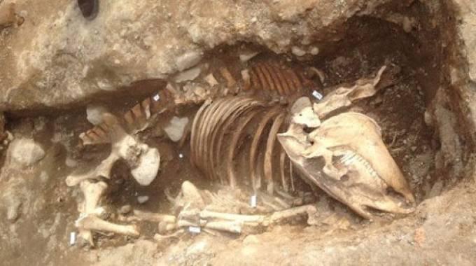 Lo scheletro del cavallo di Vimercate