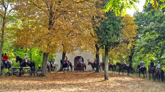 Turismo Equestre: in Veneto ci sarà legge ad hoc